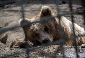 Кыргызстандагы жалгыз зоопаркка каражат отчеттор текшерилгенден кийин бөлүнөт