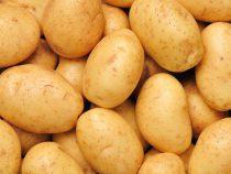 Фермеры Иссык-Кульской области смогли реализовать 150 тысяч тонн картофеля