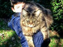 Названа самая длинная кошка в мире