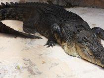 Наводнение принесло в австралийский город крокодилов и змей