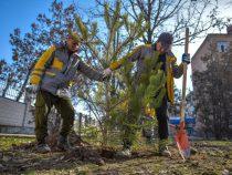 Зимние посадки хвойных деревьев в столице завершены