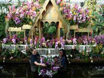 Фестиваль орхидей открылся в Лондоне