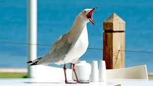В Австралии ввели собачьи патрули для борьбы с чайками