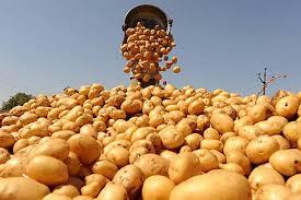 Кыргызстан начал экспортировать картофель вТуркменистан
