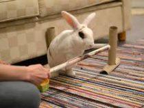 Кролик сделал 20 трюков за минуту и попал в Книгу рекордов Гиннесса