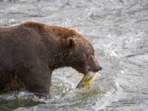 «Скорми бывшего медведю». Необычная акция в День всех влюбленных