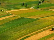 Кыргызстанским фермерам в этом году выгодно будет сеять чечевицу, гречиху и сою