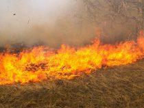 Пожар в Ботаническом саду Бишкека потушен