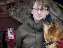 Для бездомных собак создали собственный Tinder