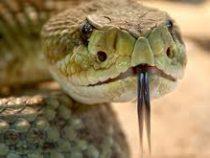 «Назови змею именем бывшего». В Австралии объявили необычный конкурс