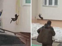 Жители прогнали лося, метнув в него кота