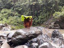 Орангутанги приспособили листья в качестве зонтиков