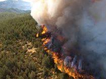 В Кыргызстане возросло количество лесных пожаров
