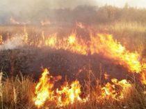 В Кыргызстане увеличились случаи возгорания сухотравия