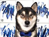 В Канаде хозяева обучили собаку рисовать и заработали на этом более $5000