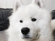 В Норвегии собака стала звездой Instagram
