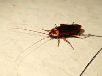 Житель США пытался убить таракана и получил пулю в ответ