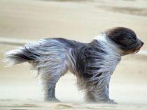 Осторожно! В Бишкеке ожидается сильный ветер!