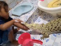 Смелая девочка почистила зубы крокодилу