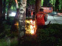 Мэрия Бишкека продолжает наводить порядок на столичных улицах