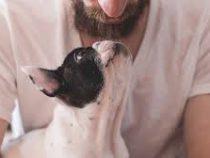 В мужской бороде нашли больше бактерий, чем в собачьей шерсти