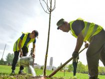 Свыше двух тысяч деревьев было высажено в марте в столице