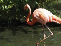 В Испании фламинго вызвал переполох в аэропорту