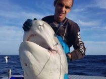 Огромная откушенная голова акулы взбудоражила соцсети