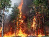 Свыше 11 тысяч человек эвакуированы насеверо-востоке Китая из-за лесных пожаров
