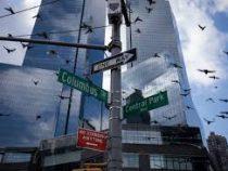 В США небоскрёбы ежегодно убивают 100 тысяч птиц