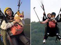В Китае владельцы корги летают с питомцами на парапланах