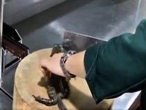 В Китае повар не смог приготовить лягушку после того, как она замяукала