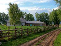 В Чуйской области вдоль границы с Казахстаном высадят деревья