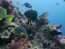 Крупнейший в мире коралловый риф появится в ОАЭ
