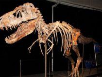 В США выставили на аукцион скелет тираннозавра за 3 млн долларов