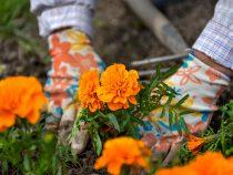 Столичные клумбы украсят несколько тысяч однолетних цветов