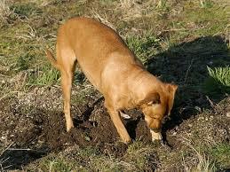 ВТаиланде собака спасла заживо похороненного младенца