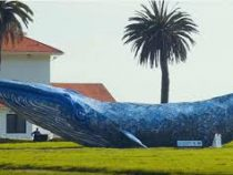 Самого большого кита из пластика создали в США