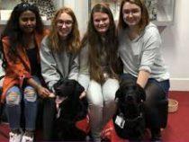 В Британии университет нанял пять лабрадоров  в помощь студентам