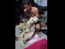 Пёс «умирает» каждый раз, когда ему нужно мыться