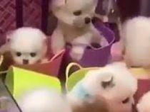 Живые щенята в автомате с игрушками взбесили пользователей соцсетей