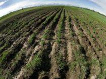 Свыше 9 тысяч льготных кредитов выдано фермерам с начала года