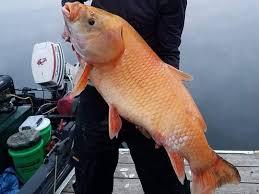 В США поймали рыбу-мутанта возрастом в 100 лет