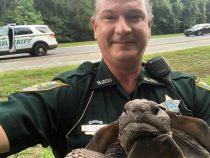 Полиция США «задержала» черепаху на дороге