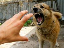 В Араване с подозрением на бешенство госпитализированы покусанные собакой 7 человек