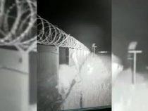 Настырный медведь прорвался на территорию аэропорта на Камчатке