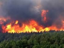 Площадь лесных пожаров в регионах Сибири превысила 1,6 миллиона гектаров