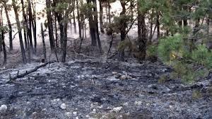 Лесные пожары за сутки уничтожили 900 га леса в Хорватии