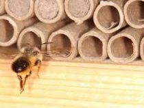 Пчелы начали строить гнезда из пластиковых отходов