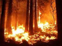 Более 200 гектаров леса сгорели на юге Франции